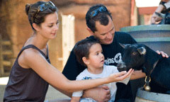 Family with Small Child Petting a Goat