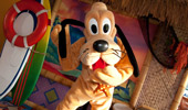 Pluto dances at the beach-themed Disney's PCH Grill.